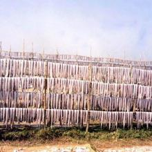 Fish are being dried by the fishermen caught in winter fishery at Dublar char of Bangladesh Sundarban