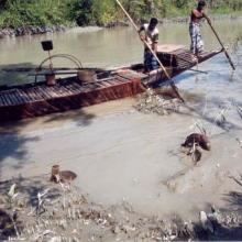 Fishermen are catching fish with the help of Otter (Lutra percipicilata) in the Sundarbans of Bangladesh