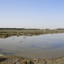 Wasit Sabkha Panorama