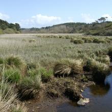 Queue d'étang de Trunvel