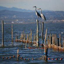 L'Albufera. Sistema de pesca tradicional (redolín)