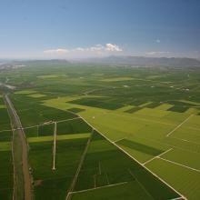 L'Albufera. Vista aérea del arrozal en época de cultivo
