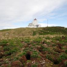 The path up to the lighthouse is between corridors of puffins nests in the ground