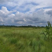 Sedge swamp