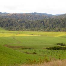 Paysage forestier de Bemanevika