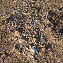 Valeur culturelle du littoral d'Aftissate: amas coquillier préhistorique sur le plateau littoral