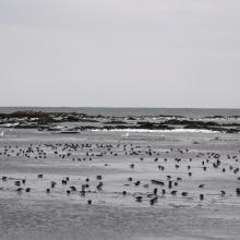 The lagoon at Sørkappøya with the purple sandpiper