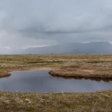 Small pond in the eastern (mire) part of the reserve.