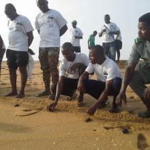 Lâcher de jeunes tortues marines à Grand-Popo