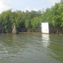Portion de mangrove sacralisée sur la lagune côtière à Grand-Popo
