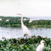 La Laguna de Zapotlán brinda albergue, abrigo y alimentación a cuando menos 44 especies de aves residentes y migratorias, entre ellas garzas, zambullidores, pelícanos, cigueñas, patos pejijes, cercetas, chorlitos, gallaretas, abocetas y jacanas, por tan sólo citar algunas.