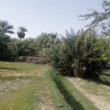 Oasis du Kawar