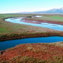 Salt marsh of Qaamassoq/Flakkerhuk.