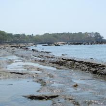 Playa Los Cobanos, Arrecife Rocoso