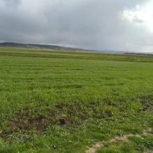 paysage de la Garaâ de sejenane
